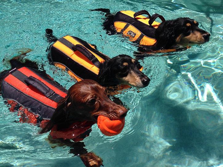 synchronized-swimming-VKK4LDW.jpg