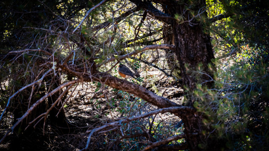 Sedona - Bird in Tree.jpg