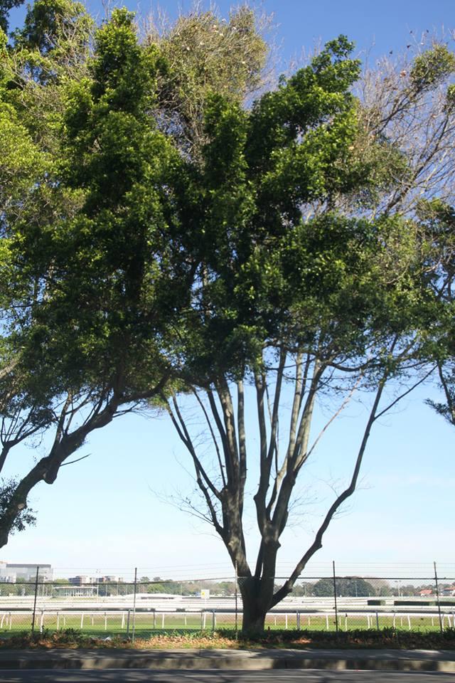 Tree ID 199