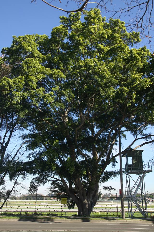 Tree ID 182