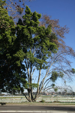 Tree ID 180