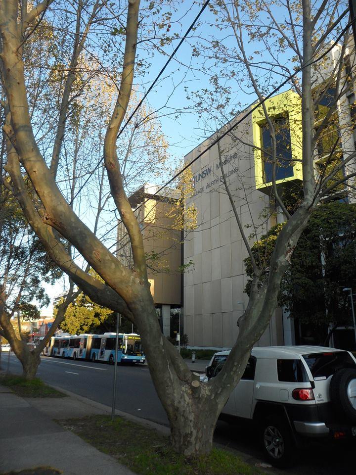 Leaf Plane Tree