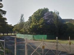 Trees inside Randwick Racecourse