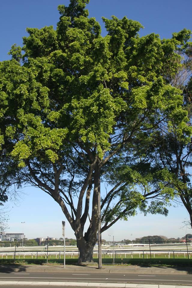 Tree ID 190