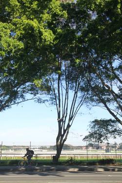 Tree ID 193