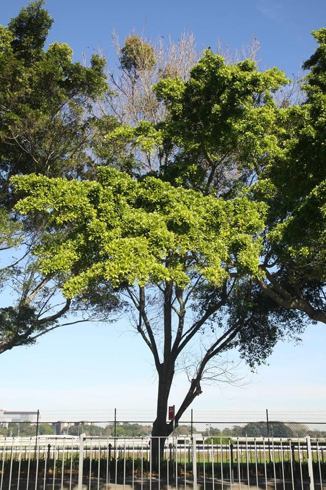 Tree ID 203