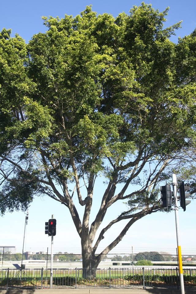 Tree ID 202