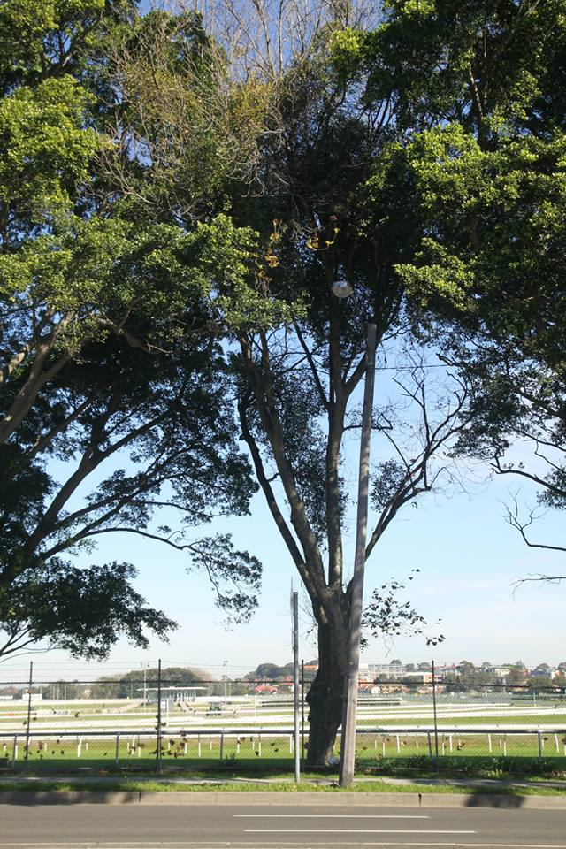 Tree ID 187
