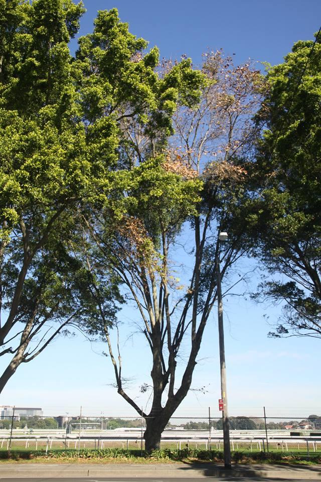 Tree ID 197