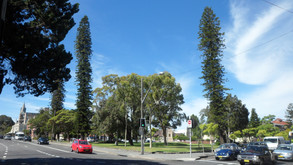 Randwick's irreplaceable trees