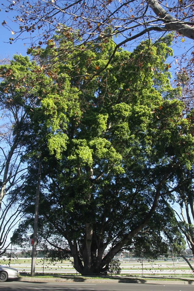 Tree ID 179