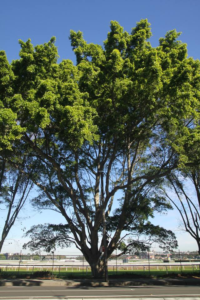 Tree ID 194