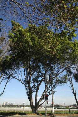 Tree ID 200