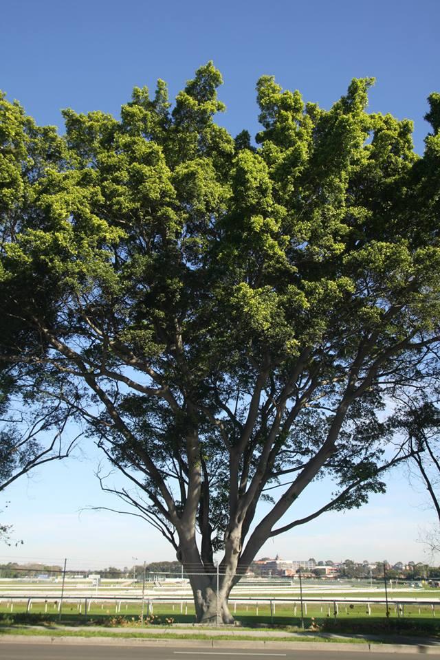 Tree ID 188