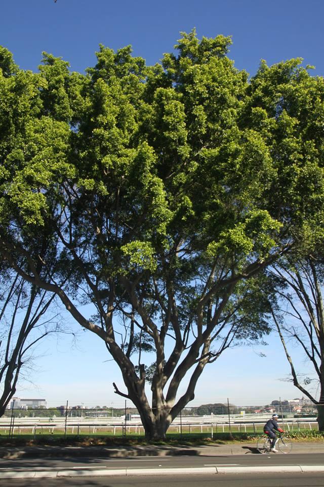 Tree ID 196