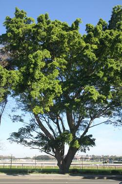 Tree ID 192