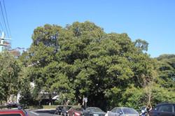 Tree ID 107