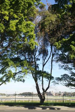Tree ID 191