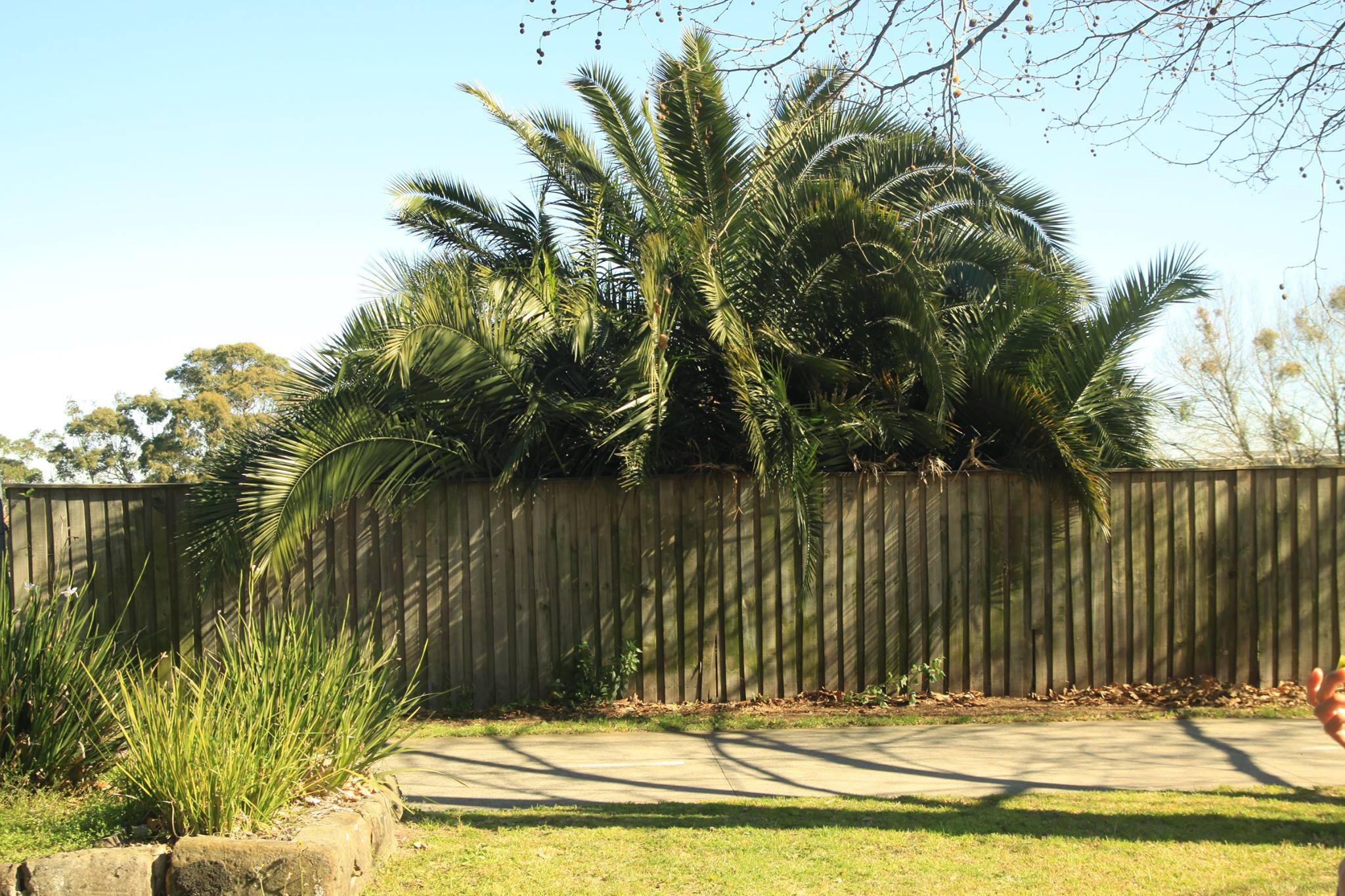 53 Palm