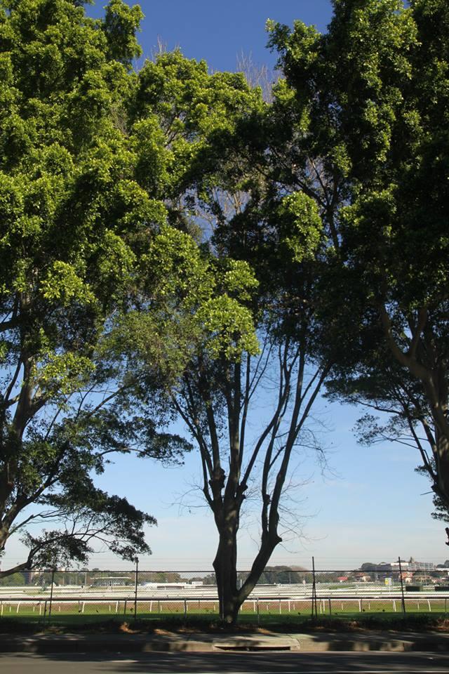 Tree ID 195