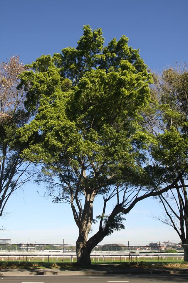 Tree ID 198