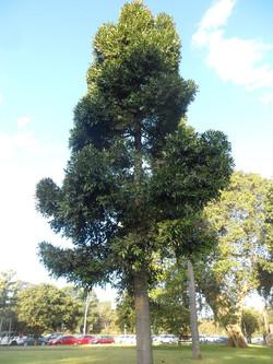 8 Queensland Kauri Tay Reserve
