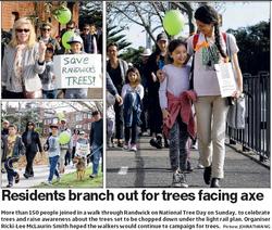 Randwick Tree Walk for Tree Day