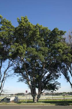 Tree ID 186