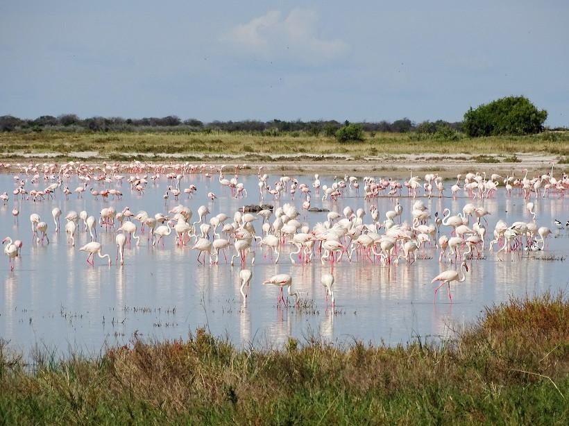 Flamingos im Etosha Nationalpark - Namibia
