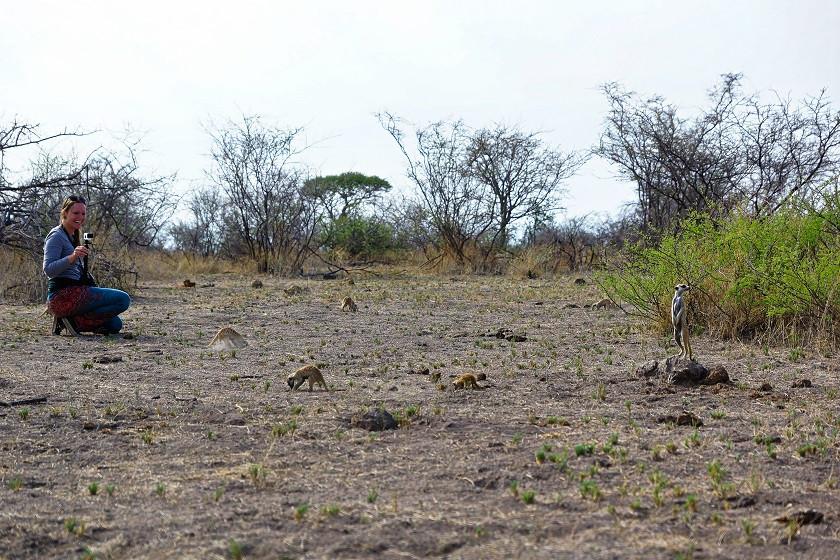 Erdmännchen soweit das Auge reicht - Botswana
