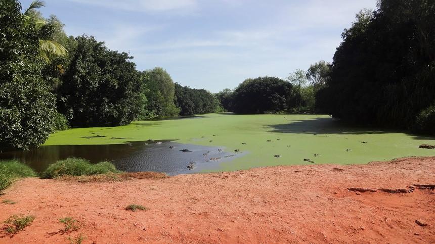 Lauernde Krokodile - Crocodile Park in Broome