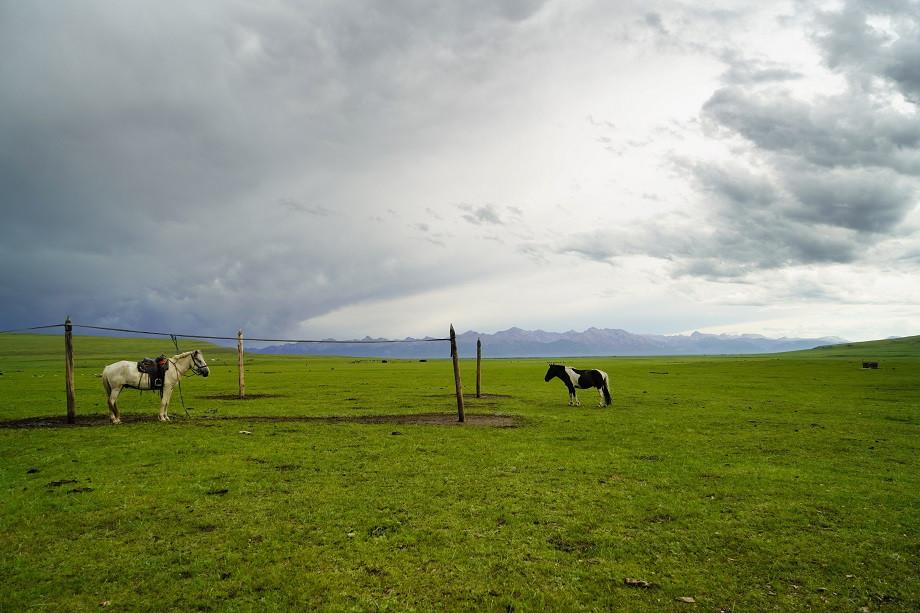 Pferde auf einer Weide in der Mongolei