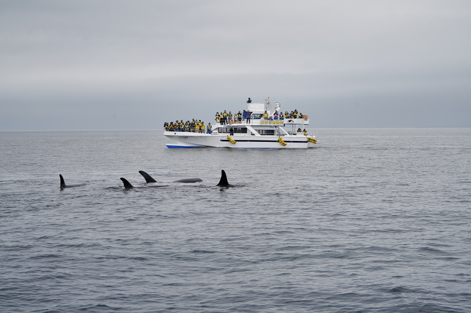 Whale Watching Boot in Rausu