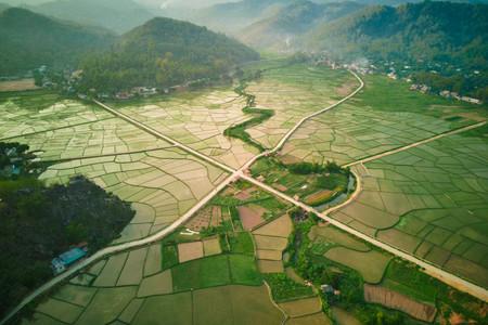 Blick auf Reisfelder aus der Luft