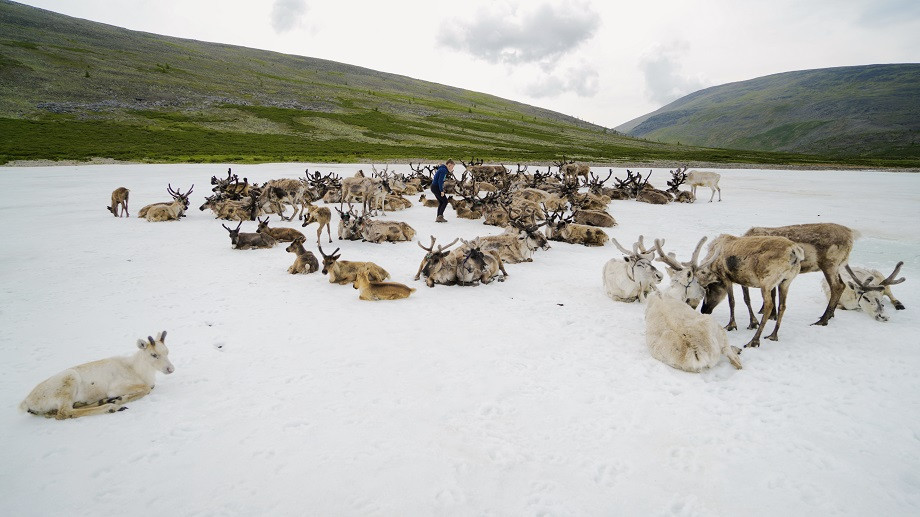Rentiere und Kati auf einem Schneefeld in der Mongolei