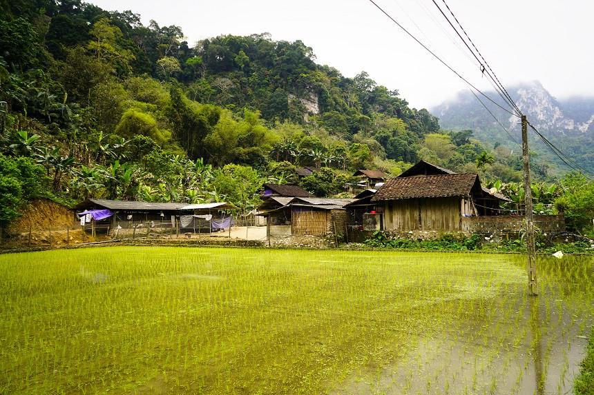 traditionelles-vietnamesisches-Haus-mit-Reisfeld