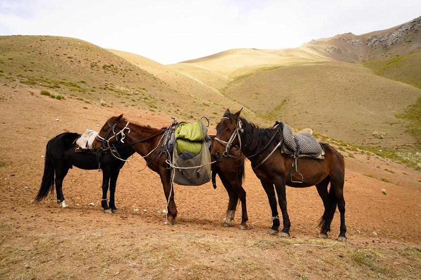 Drei Pferde vor hügeliger Landschaft in Kirgisistan