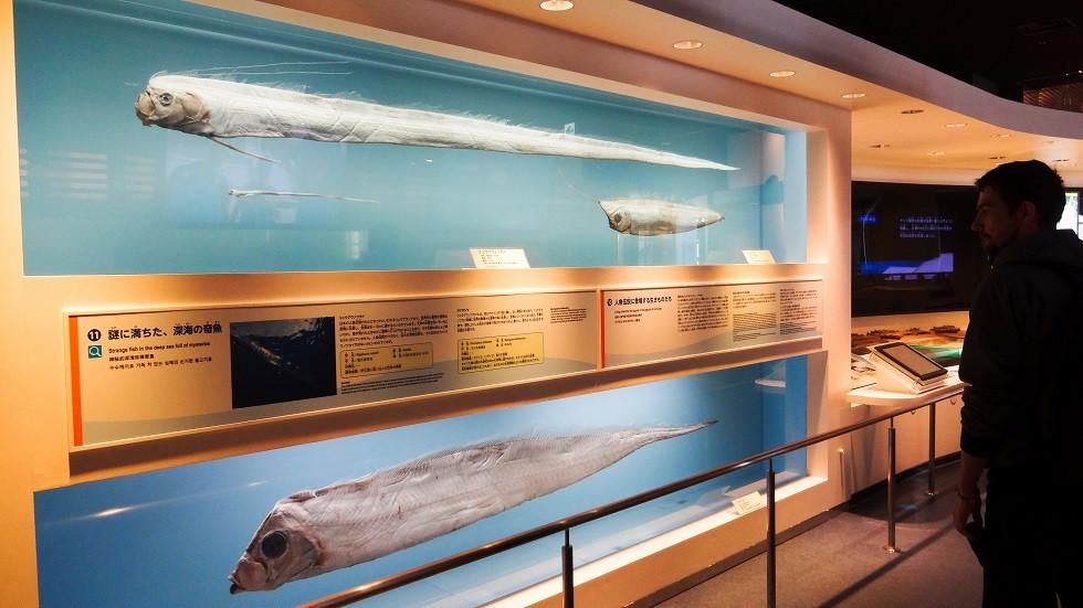 Skurrile Tiefseekreaturen - Churaumi Aquarium Okinawa