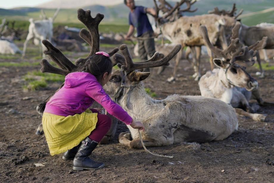 Mädchen bindet die Rentiere über Nacht an Holzpflöcke, damit sie nicht ausbüchsen