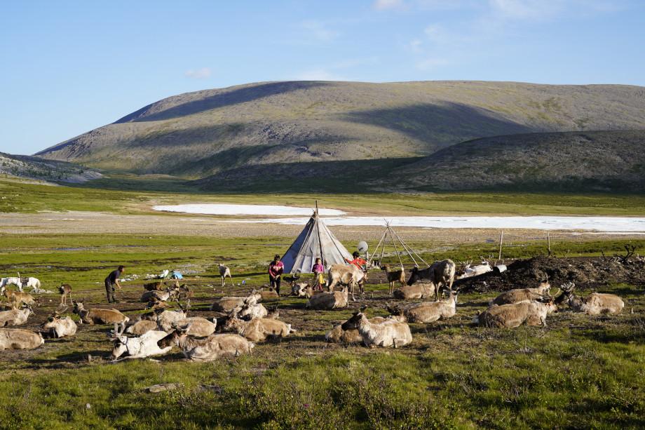 Tipi Zelt und Rentiere der Tsaatan Nomaden