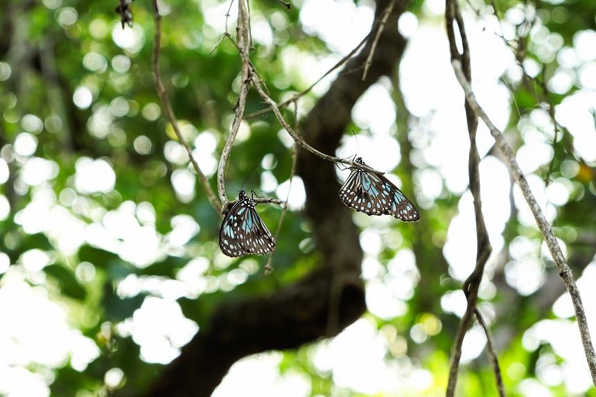 Schmetterlinge im Baum