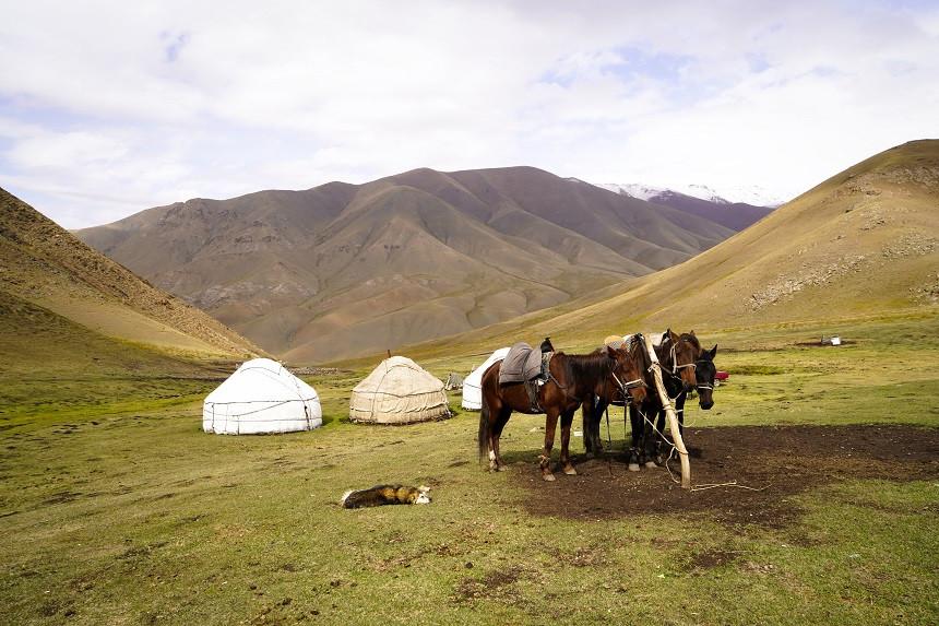 Drei Pferde und ein schlafender Hund vor Jurten