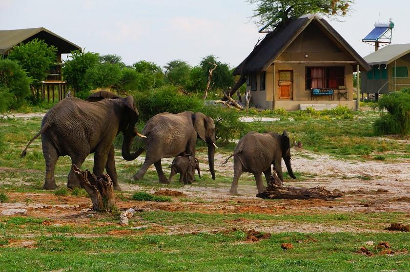 Wilde Elefanten (mit Baby) im Elephant Sands