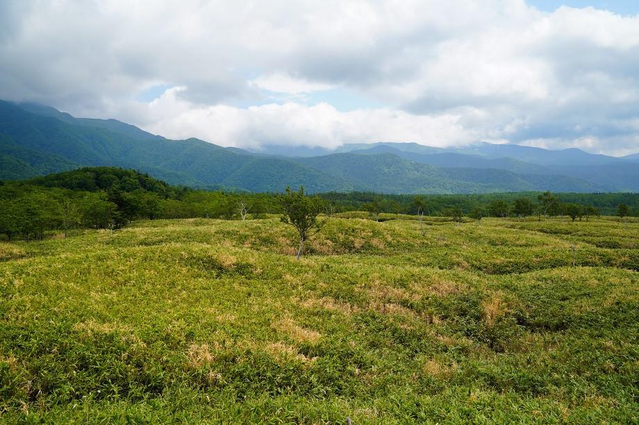 Blick auf Grasslandschaft und Berge
