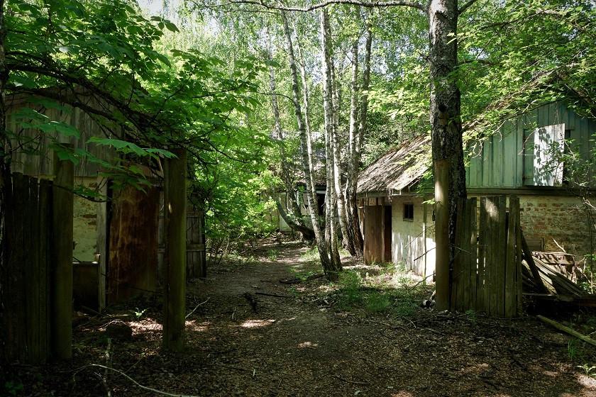 Das mittlerweile verwucherte Dorf Zalissya - Tschernobyl