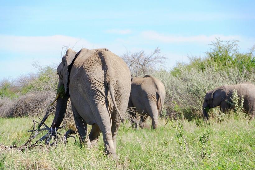 Elefanten im Etosha Nationalpark - Namibia