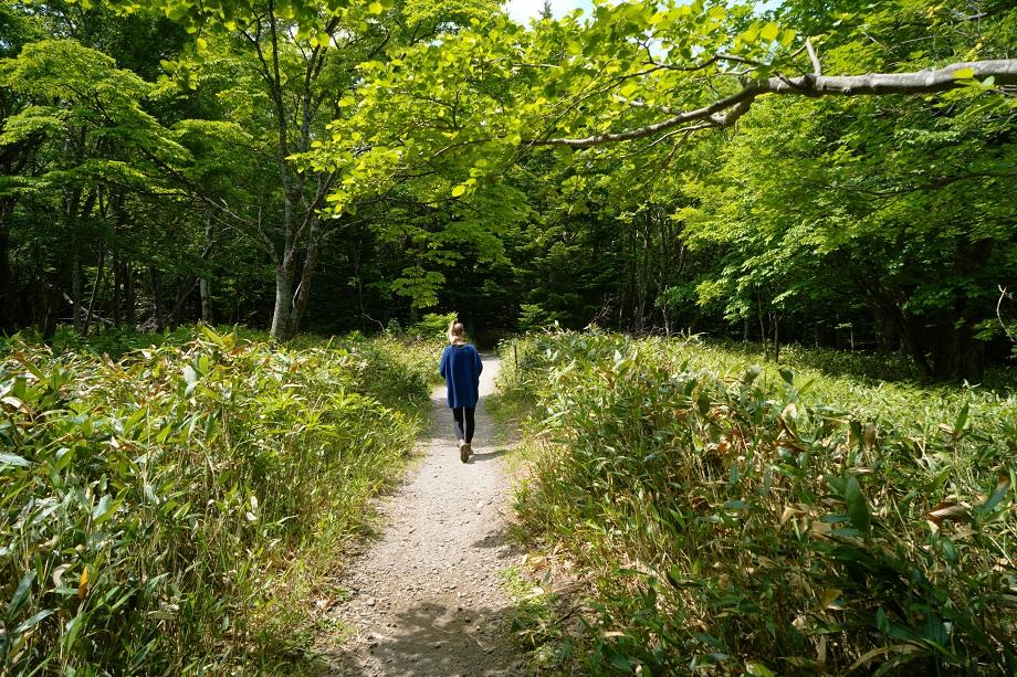 Wandern durch ein Waldstück im Shiretoko Nationalpark