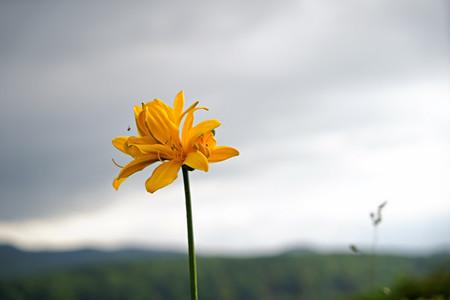 Blume in Japan