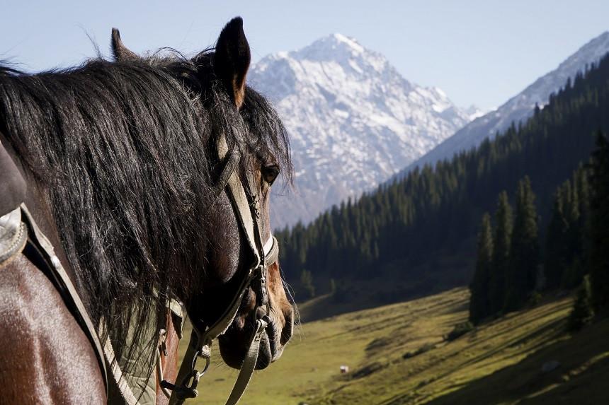 Pferd vor schneebedecktem Berg