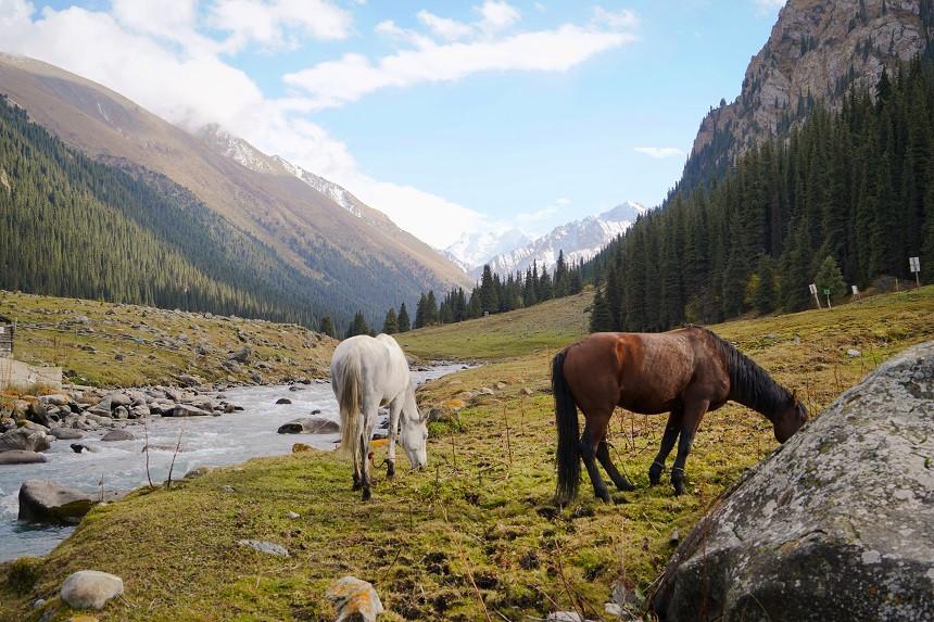 Pferde grasen im Tal Altyn Arashan